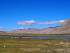 大平原サイクリング